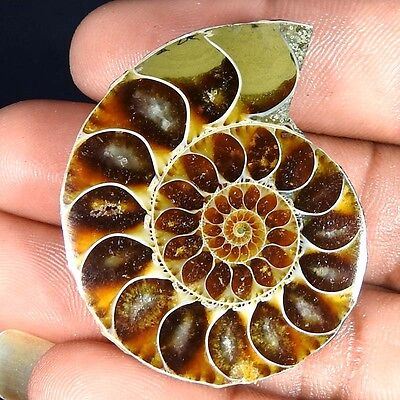 79.80Cts. 100% NATURAL FOSSIL DESIGNER AMMONITE FANCY CABOCHON LOOSE GEMSTONE
