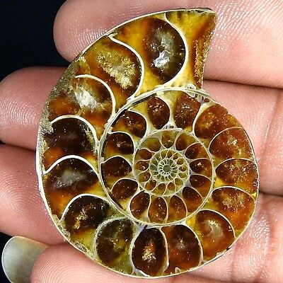 89.90Cts. 100% NATURAL FOSSIL DESIGNER AMMONITE FANCY CABOCHON LOOSE GEMSTONE