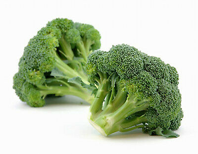 Broccoli GREEN SPROUTING CALABRESE - 100 Seeds (HEIRLOOM / ORGANIC)