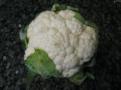 Cauliflower SELF BLANCHING 100 Seeds (HEIRLOOM) Vegetables Snowball