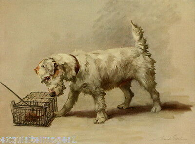 1914 Maud Earl~Sealyham Terrier Dog Dogs Eyes Bird in Cage~ NEW Large Note Cards