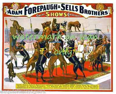 1898 Forepaugh & Sells Bros Circus Poster~Great Dane Dogs Show NEW Lg Note Cards
