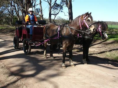 Horse Drawn Vehicle with 4 or 2 shafts