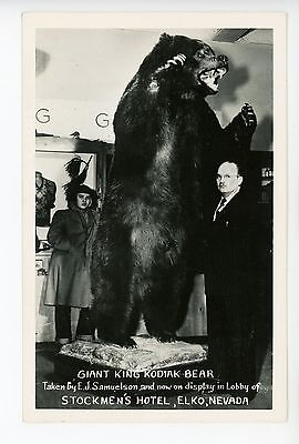 Stuffed Kodiak Bear RPPC Elko NV Hotel RPPC Vintage Photo Taxidermy 1940s