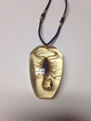 Scorpion Necklace (Real)
