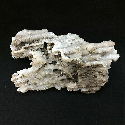 Agatized Fossil Coral 170769 42g Metaphysical Emotional Balance Healing Strength