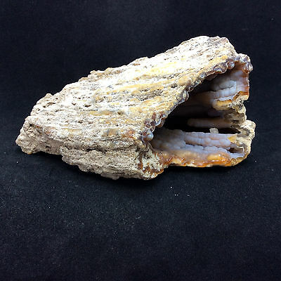 Agatized Fossil Coral 170774 198g Metaphysical Emotional Balance Healing