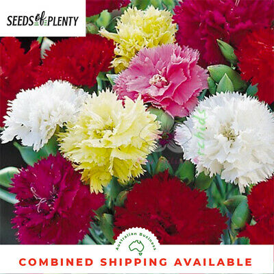 CARNATION - Chaboud Mix (200 Seeds) Spectacular Bloomer