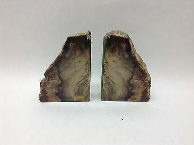 """Petrified Forest Redwood Bookends By Ginkgo Heavy 7"""" Tall"""