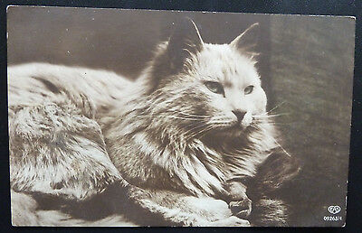 Vintage Cat Postcard- Longhaired Cat- Posted 1919