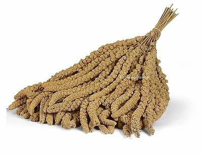 1kg Quality Millet Spray Bird Food Hanging Treat Budgie Canaries Cockatiels Seed