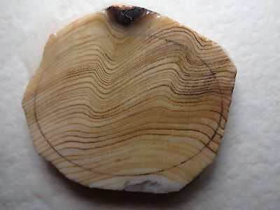 Petrified Wood Agate Cabochons Lapidary Preforms Slab Rock