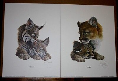 American Cats Cougar and Bobcat by Ray Harm Big Cat Wildlife Panther Wildcat