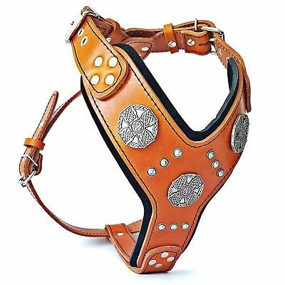 Bestia Maximus dog harness. studded design. padded. large breeds-Premium quality