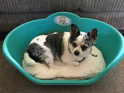 Medium Aqua Plastic Pet Bed Cat Dog Basket, Luxury Cream Fleece Washable Cushion