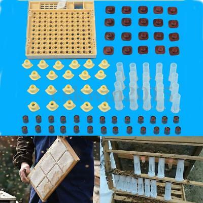 Complete Queen Rearing Cupkit Bee Catcher Boîte d'apiculture 100 Cages à cellule