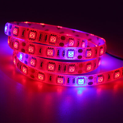 Full Spectrum LED Grows Light led strip Lamp For Hydroponic Greenhouse Plant 12v
