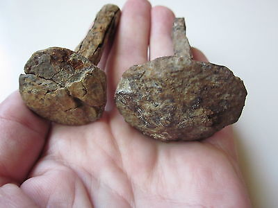 Ancient lot 2 ROMAN iron nails for crucifixion 1-2 century AD