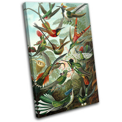Birds Floral Tropical Vintage Animals SINGLE CANVAS WALL ART Picture Print