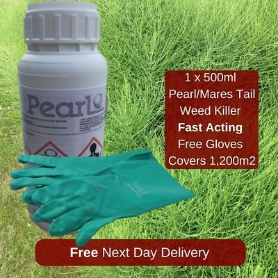 Kill Mares Tail Horse Tail And Other Weeds With Whippet/pearl With Gloves