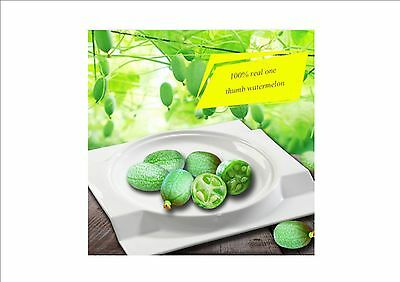 BELLFARM Heirloom Mouse Melon-Cucamelon Melothria Scabra Seed-only ONE seed