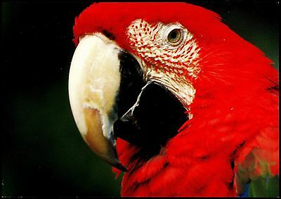 Pc- Bird -Parrot - Postcardsonline