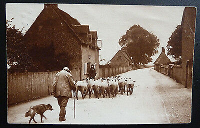Rural Farming/Sheep Postcard- A Shepherd and his Flock- Posted 1904