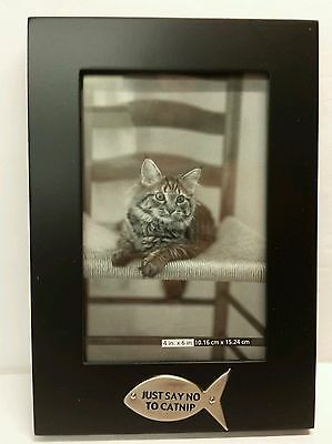 American Greetings Cat Lovers Photo Picture Black Frame Just Say No To Catnip