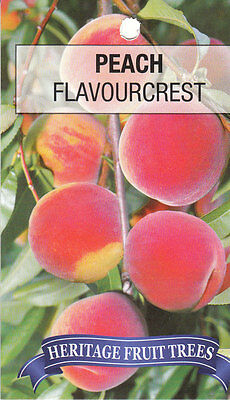 peach flavourcrest bare rooted fruit tree x1