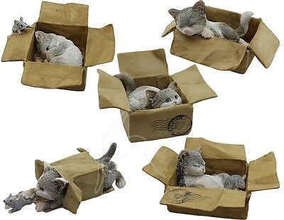 Bella Collection Playful Kittens - 5 To Choose From