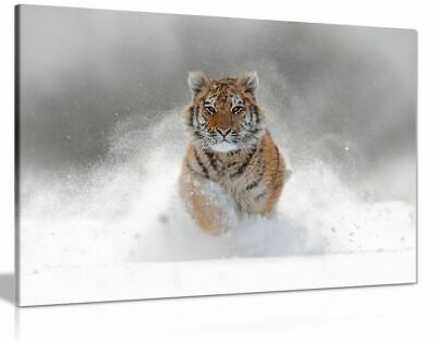 Siberian Tiger Running In Snow Wildlife Nature Canvas Wall Art Picture Print
