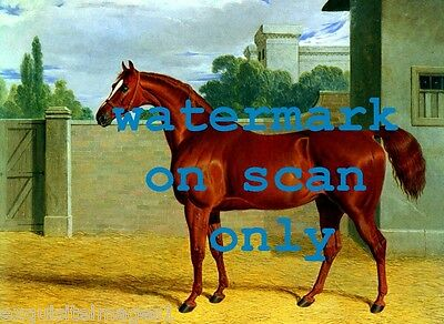 1831 Antique Artwork~Chestnut Stallion Race Horse in Stable~NEW Large Note Cards