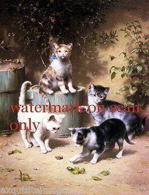 C.Reichert~Kitten Kittens Cat Cats~Play with Beetle~NEW Lge Note Cards