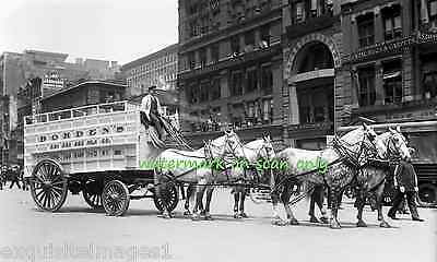 1908 Photo~Work Horse Parade~Winning Team in Harness~Borden's NEW Lge Note Cards