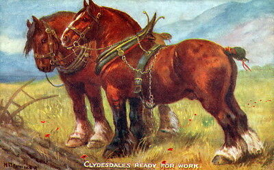 Vintage Art-N.Drummond~ Harnessed Clydesdale Horse Horses NEW Lg Note Cards