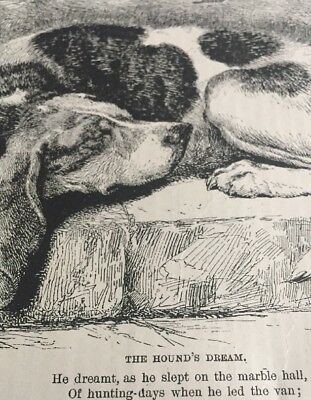 Antique Engraving The Hound's Dream Hunting Dog Sleeping 1887