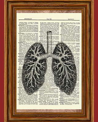 Human Lungs Anatomy Dictionary Art Print Poster Picture Skull Skeleton Science