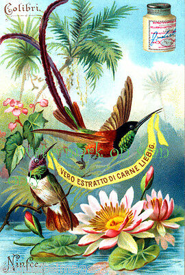 Old Trade Card~Colorful~Long Tailed Hummingbird~Water Lillies~NEW Lge Note Cards