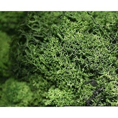 LICHEN FOLIAGE Bushes Hedges Rich Green 30g Trains Lychen HO 1/87 scale L167