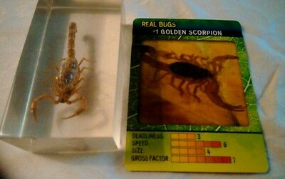 DeAgostini Encased REAL BUGS Insect NEW in PACK w/ Collector Card  #1 Scorpion