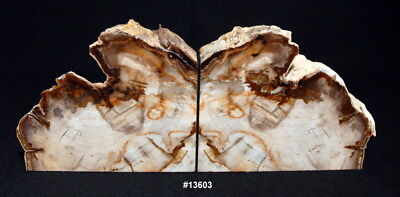 "Exquisite Petrified Wood Bookends 14 1/4"" wide 8 1/4"" tall 1 7/8"" thick 15.0 lbs"