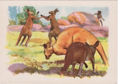 Trade Card Kangaroos