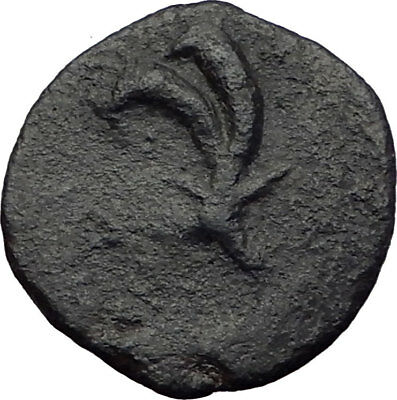 GAZA in JUDEA 2-1CenBC RARE Authentic Ancient Greek Coin ZEUS CORNUCOPIA i64145
