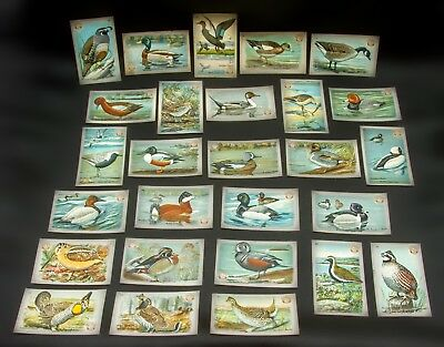 Lot of 27 Antique Trade Cards~Arm & Hammer~Church & Dwight Co.~Ducks~Birds