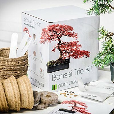 PLANT THEATRE BONSAI TRIO KIT PER LA COLTIVAZIONE DI 3 BONSAI Nuovo