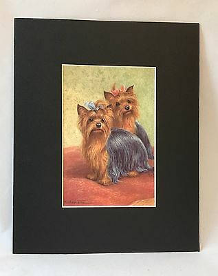 Yorkie Picture -Two Yorkies - One with Pink Bow, One with Blue Bow - Adorable
