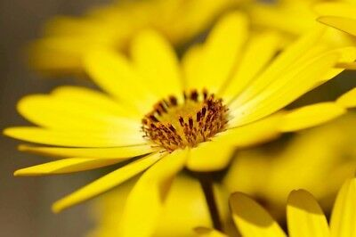 A2 Stunning Close Up Yellow Flower Nature Printed Canvas Wall Hanging