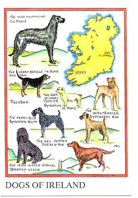 Dogs of Ireland Postcard by Bell'acards of Ireland