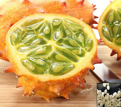 KIWANO - JELLY MELON - Horned Cucumber - 20 SEEDS - Cucumis metuliferus - #610