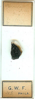 Specular Iron in Quartz Microscope Slide by G. W. F.